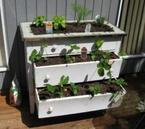 Old drawers used to grow plants