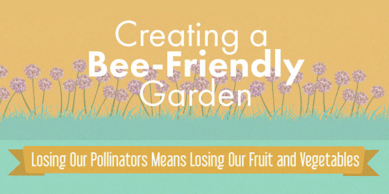 Creating a bee friendly garden