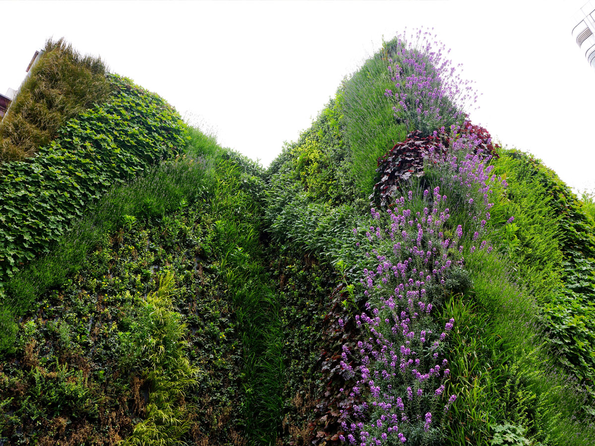 Wall garden on Edgware Road