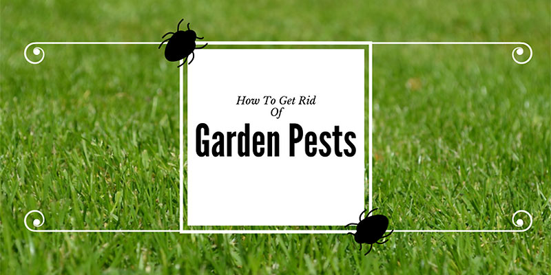 How to get rid of garden pests