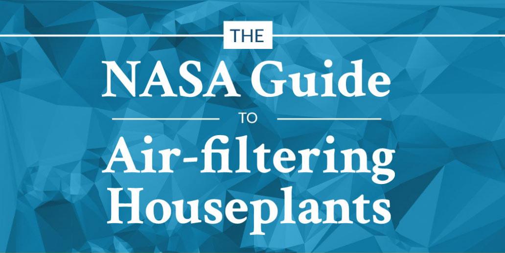 NASA guide to air-filtering houseplants