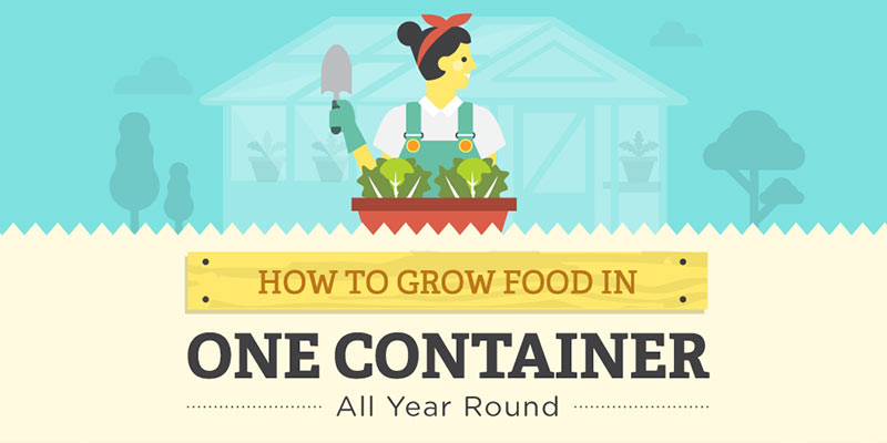 How to grow food in one container