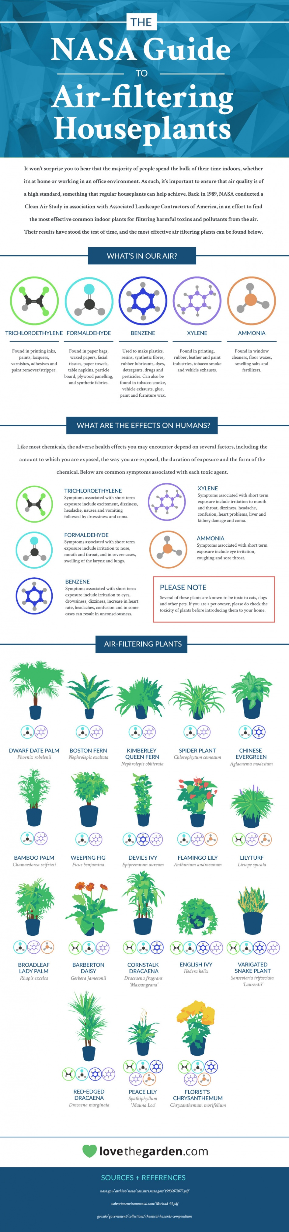 Air filtering plants infographic