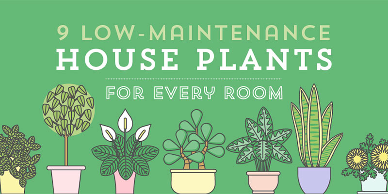 9 low maintenance houseplants