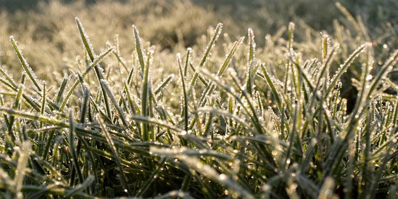 lawn in winter