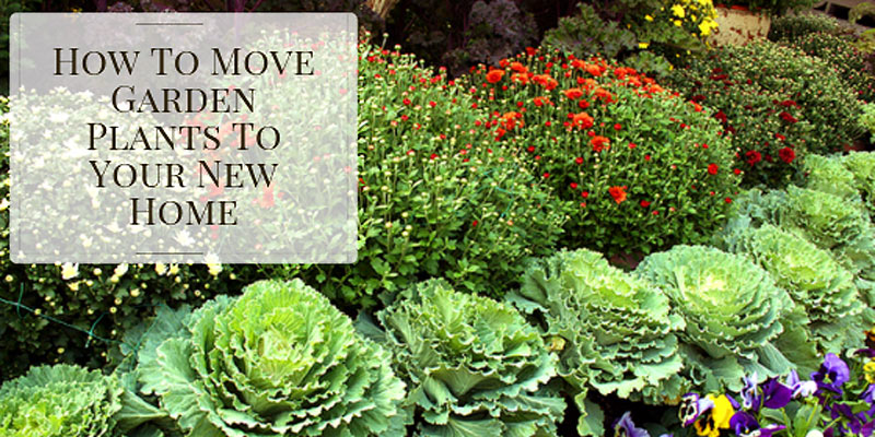 Moving plants to your new home