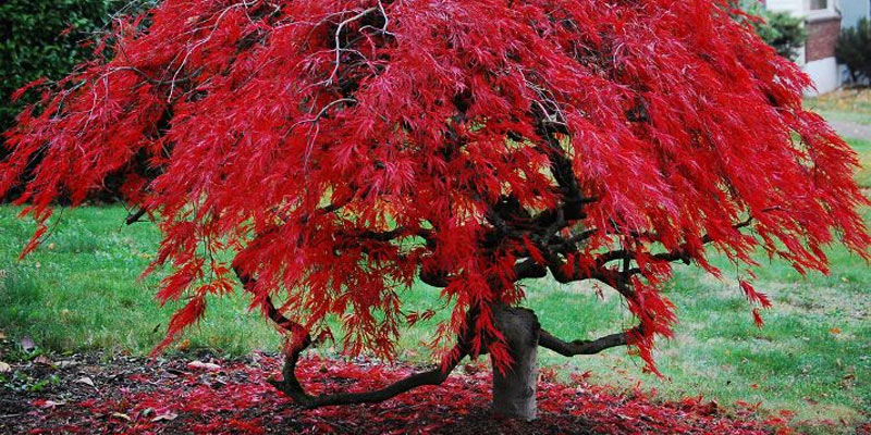 trees main