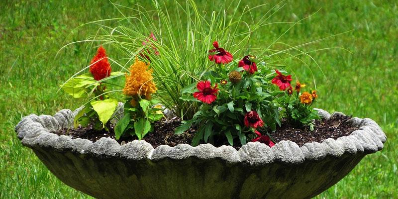 nature in the garden