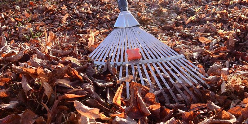 winter garden prep