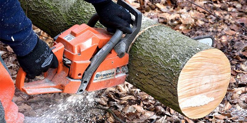 Cutting down a tree