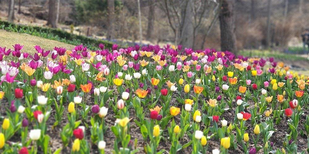 Spring gardeners